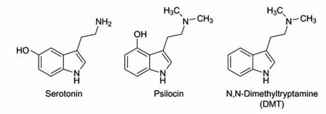 Chemical relations between Serotonin, Psilocin, and DMT